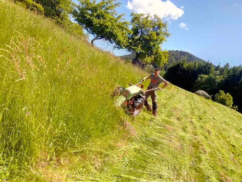 Fauchage des près Vosges